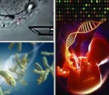 D.U. GENETIQUE ET REPRODUCTION 2021-2022